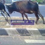 david_jones_india_trip_and_bsb_ref_phil_morris_racing_2010_2011_128